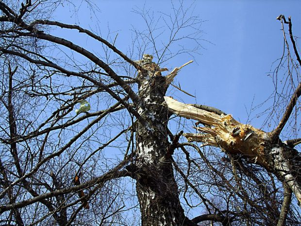 800px-Tree_of_Polish_Air_Force_Tu-154_crash_(MAK_report)